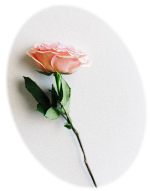 A rose, which is a symbol of Reiki